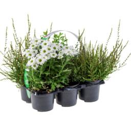 Tabuleiro de Plantas para Exterior