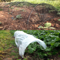 Túnel de Cultivo/Proteção