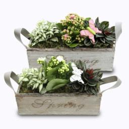 Plantas em Caixa de Madeira