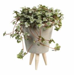 Plantas Mini Easy Care