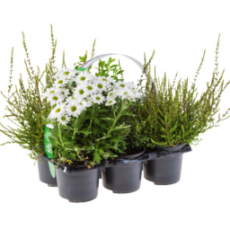 Tabuleiro Plantas Exterior