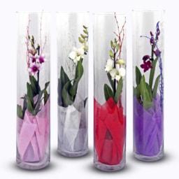 Orquídea em Tubo de Vidro
