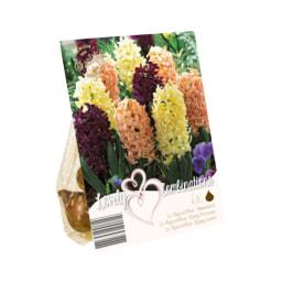 Bolbos de Flores Mix
