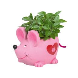 Plantas em Vaso Decorativo
