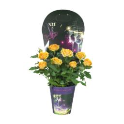 Plantas Variadas Com Flor vaso 11 cm