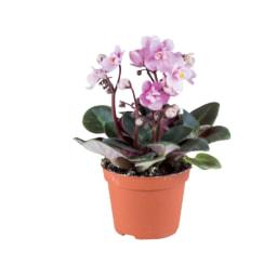 Mini Plantas Variadas com Flor