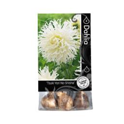 Bolbos de Flores Premium