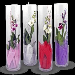GARDEN FEELINGS® Orquídeas em Tubo de Vidro