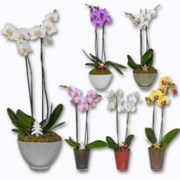 Orquídeas em Vidro