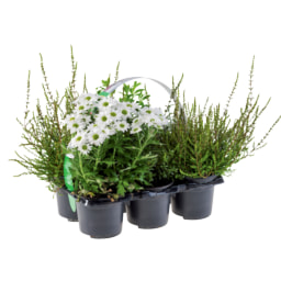 Tray de Plantas para Exterior