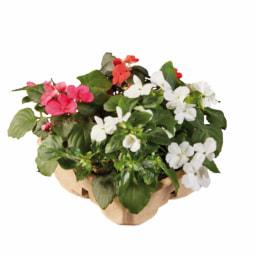 Pack ECO Flores de Jardim