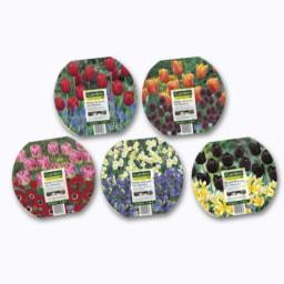 Bolbos de Flores em Tabuleiro