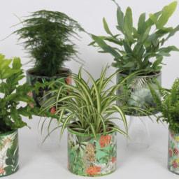 GARDENLINE® Plantas Sortidas em Vaso Decorativo