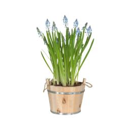 Bolbos de Flores em vaso de madeira