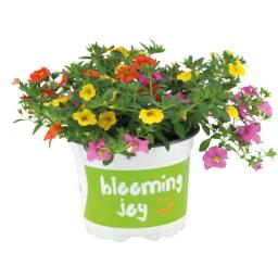 Mix Flores de Jardim