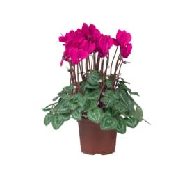 Plantas Variadas com Flor