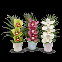 GARDEN FEELINGS® Arranjo de Orquídeas