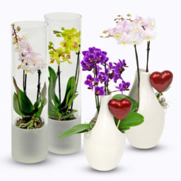 Orquídea em Vaso de Vidro