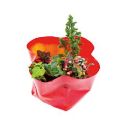 Mini Jardim de Plantas de Interior