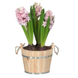 Bolbos de flores em vaso