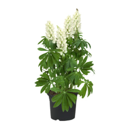 Plantas Verdes de Exterior