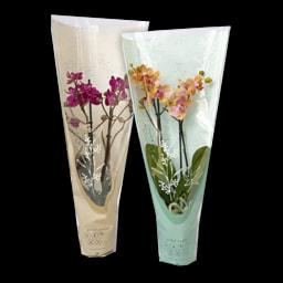 GARDEN FEELINGS® Phalaenopsis
