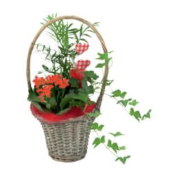 Cesto com Plantas Naturais