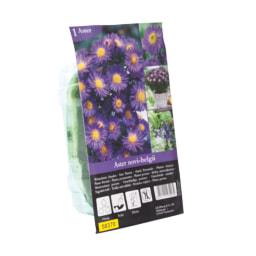 Sementes de plantas para exterior